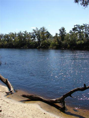 Here is a view of the Suwannee River from the 10 acre riverfront lot for sale in Branford, FL