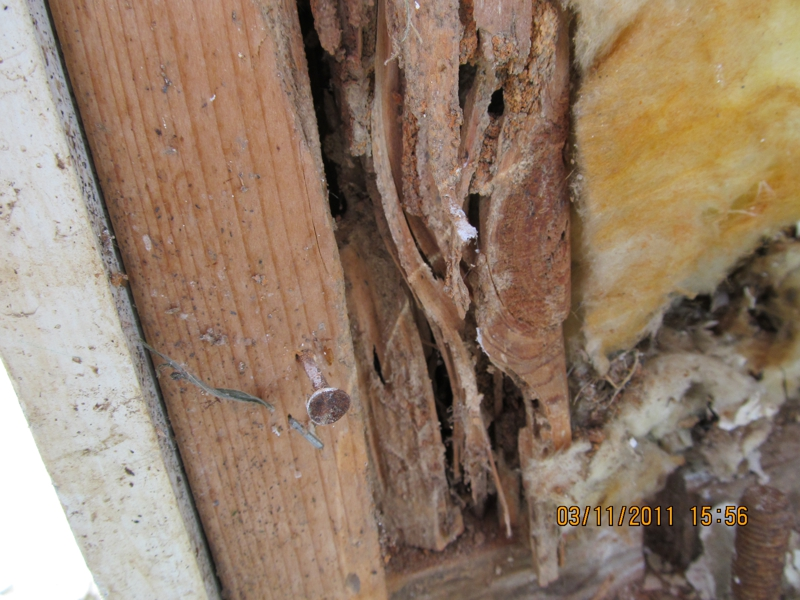 Do Termites Leave Sawdust ~ Attack of the wood destroying organisms