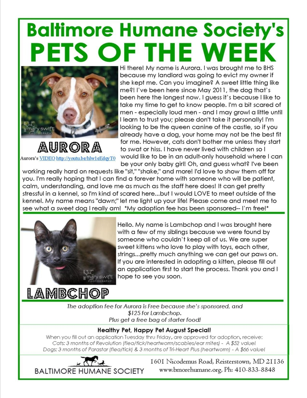 Baltimore Humane Society Pets of the week. August 2012