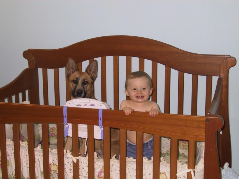 OC Dog Jail