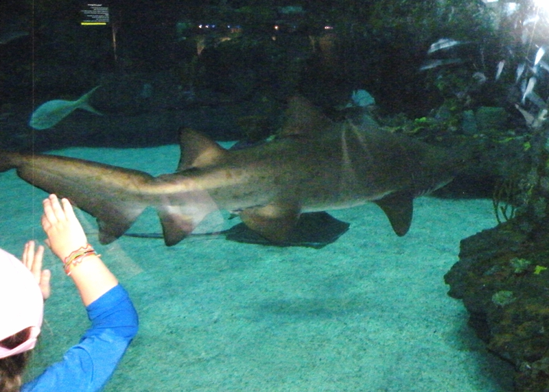 children s discovery time at fort fisher aquarium sharks