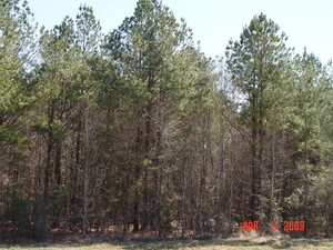 land for sale in Choctaw County Alabama
