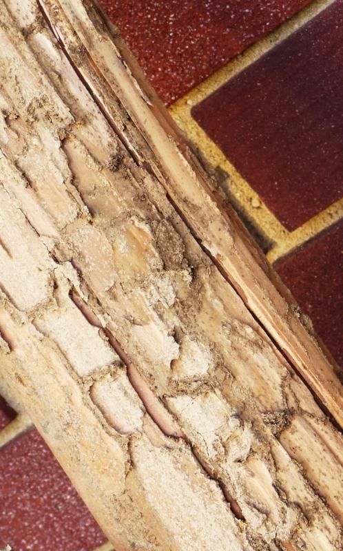 Termites ..HomeRome 410-530-2400