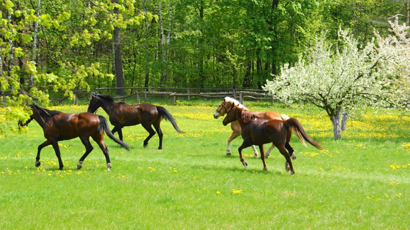 Horse Frollicking in the Springtime