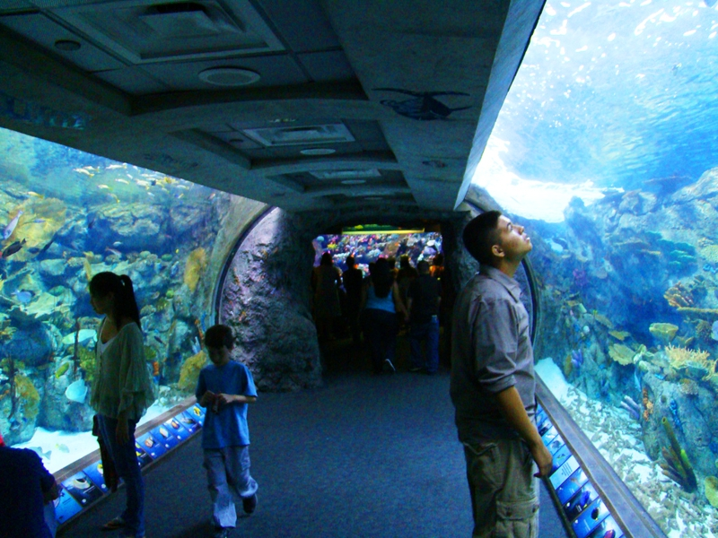 Los Angeles 411 Enjoy The Day At Aquarium Of Pacific In Long Beach California