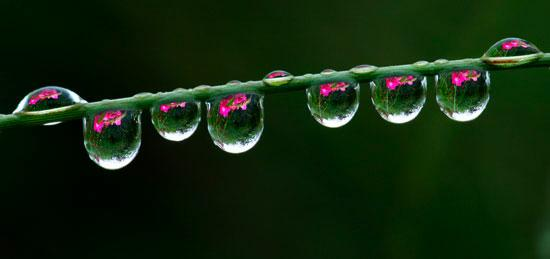 images of roses with rain drops. Rain drops on Roses or is it Roses in Raindrops.