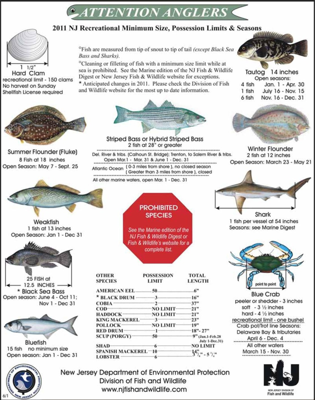 New jersey fishing recreational limits size and season for Nj saltwater fishing registry
