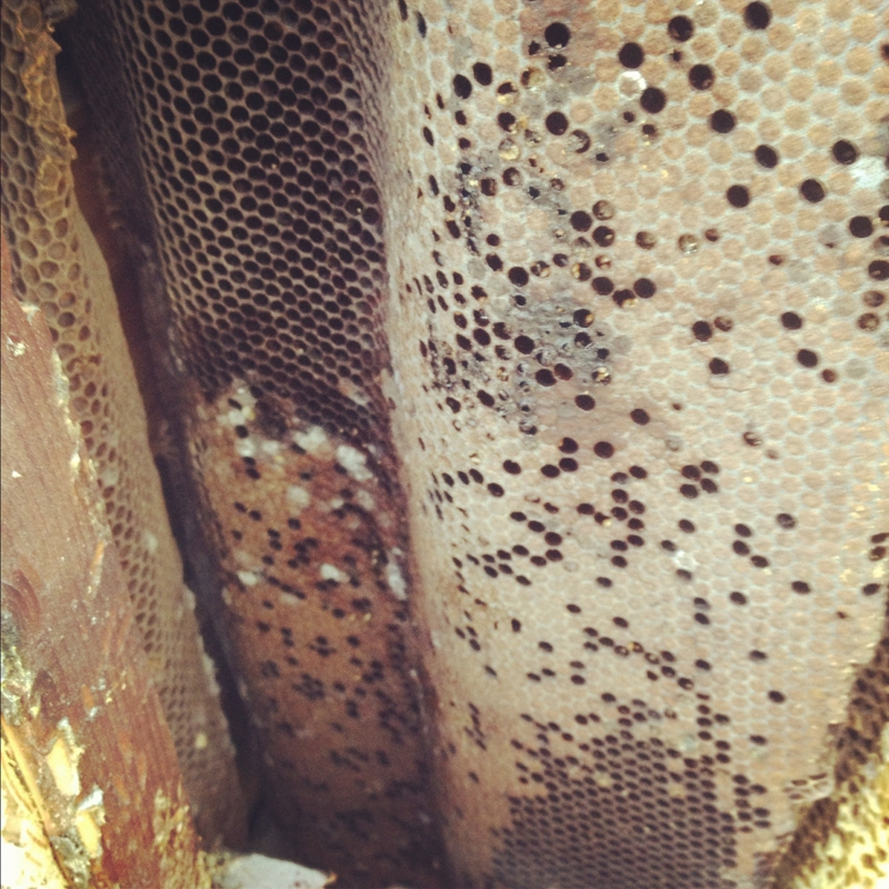 how to get rid of honey bees inside a wall