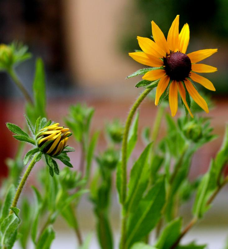ar wildflowers