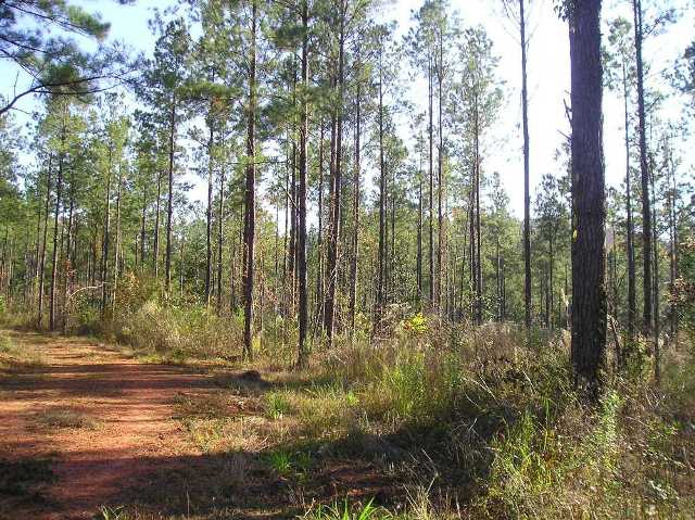 Hunting land for sale in Monroe County Alabama