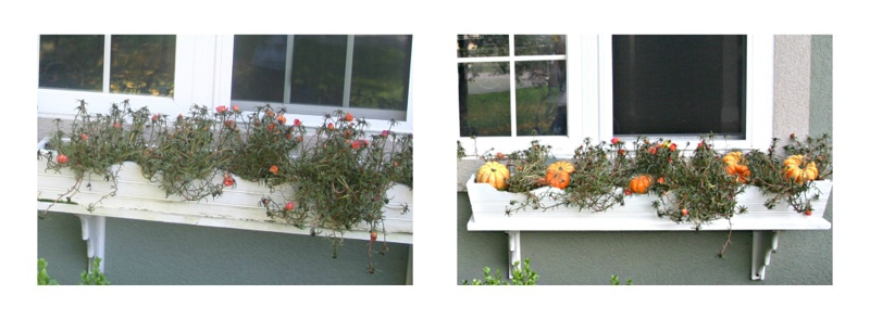 decorating window box for Fall