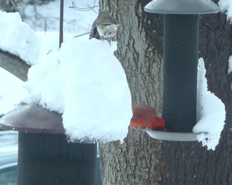 Baltimore Birds HomeRome 410-530-2400