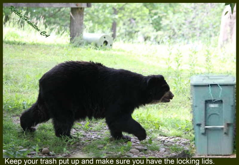 Those Bears in Your Backyard are not like Yogi