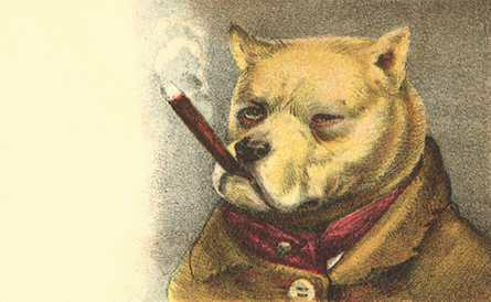 Dog smoking Cigar