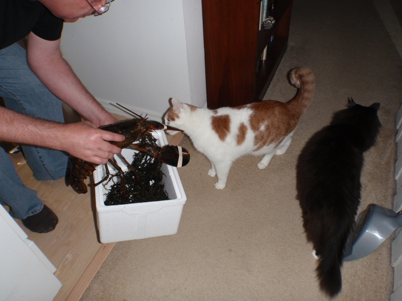 Jack & Douggy inspect and approve of the live Lobster