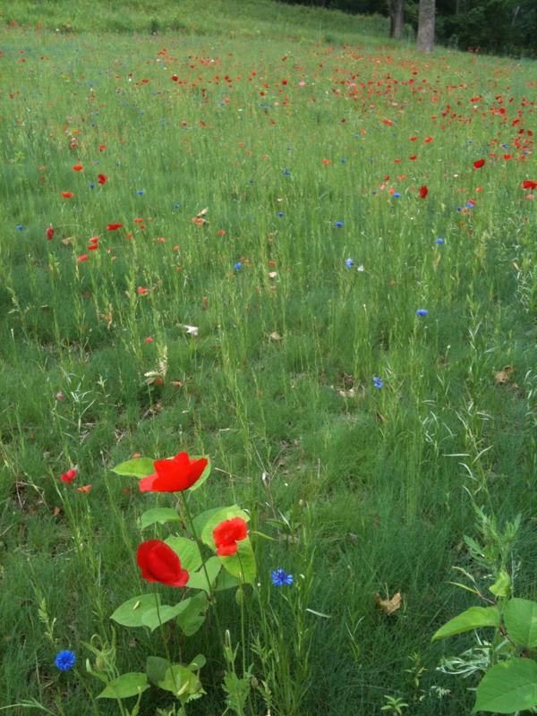 Wilton Spring