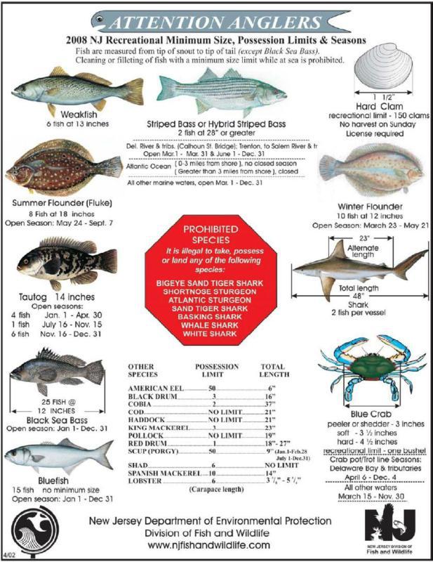Seaside park fluke fishing tournament for Fluke fishing nj