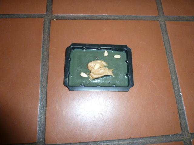 sticky mouse trap