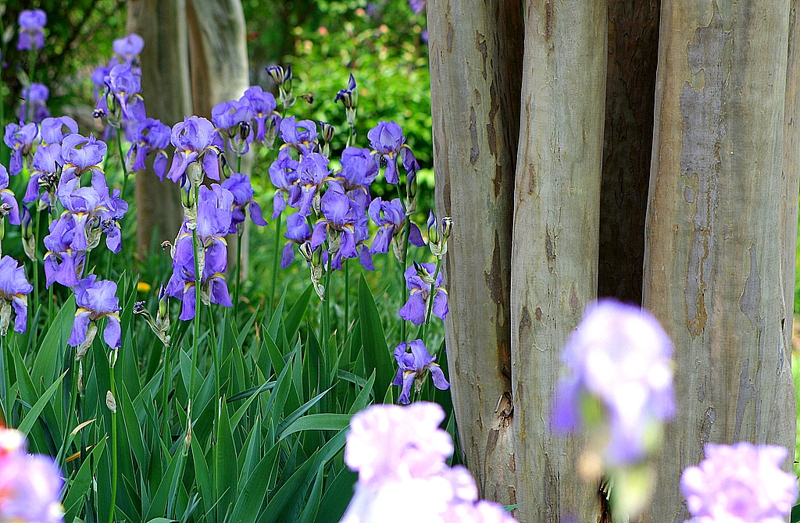 Mantua real estate agents, homes for sale