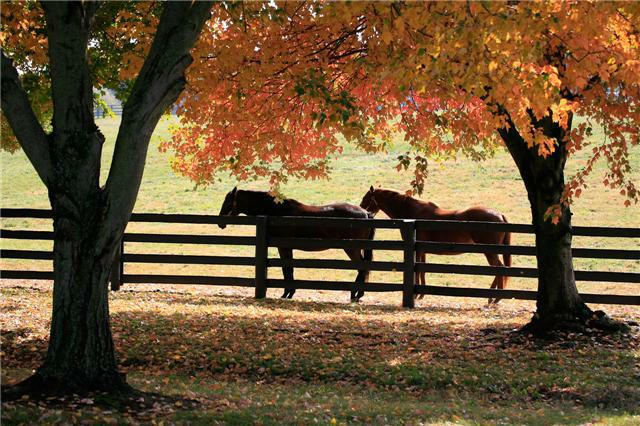 Woodford County Ky Kentucky Horse Farms Versailles