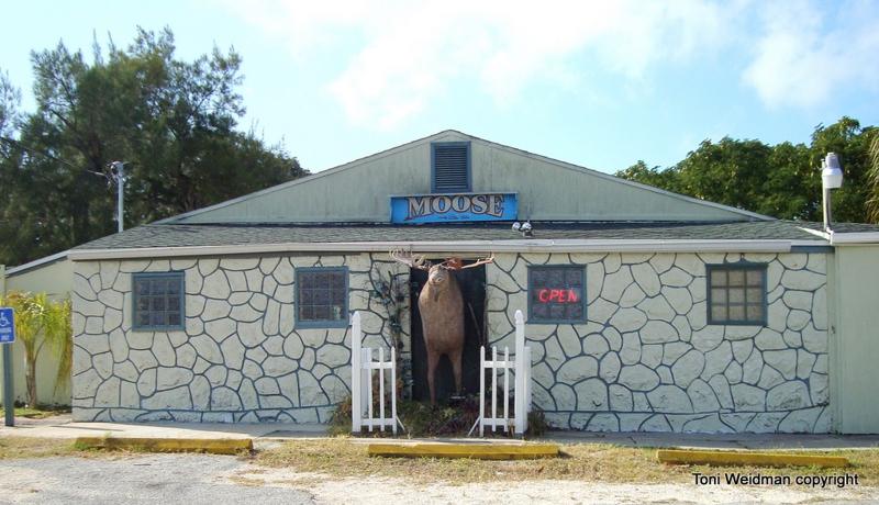 Florida Moose -New Port Richey