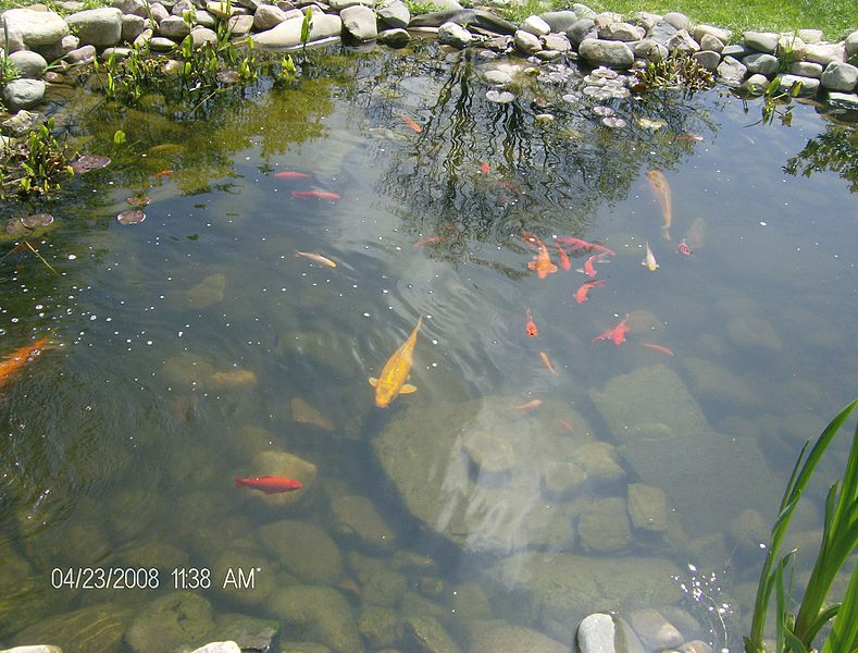 Real gardens for real people tour for Koi carp pond depth