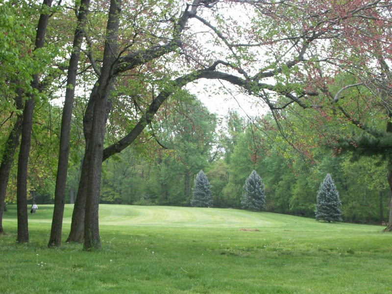 Gorgeous Mature Trees - Sligo Golf Course Silver Spring