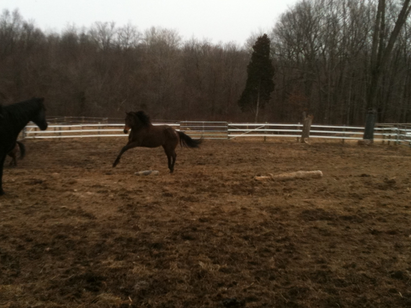 Brigita McKelvie, REALTOR, Cindy Stys Equestrian & Country Properties, Rural and Horse Properties for Sale in Eastern Pennsylvania