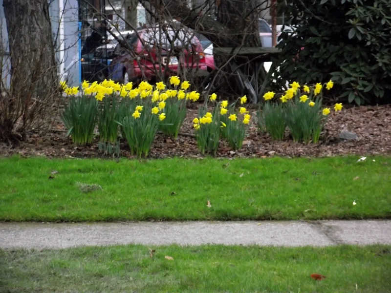 Dafys in Seattle