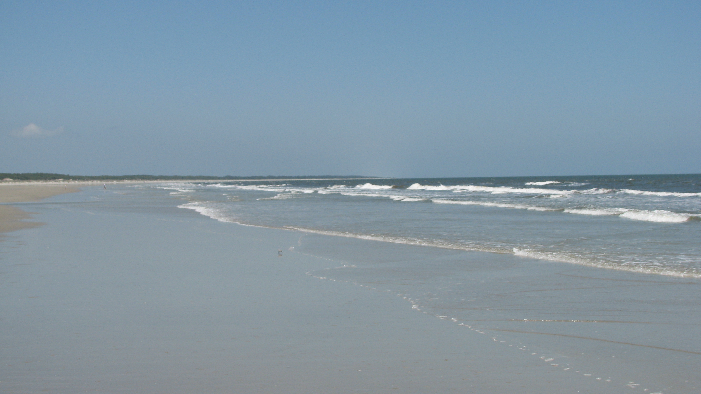 cumberland island ga - places to go and things to do coastal ga