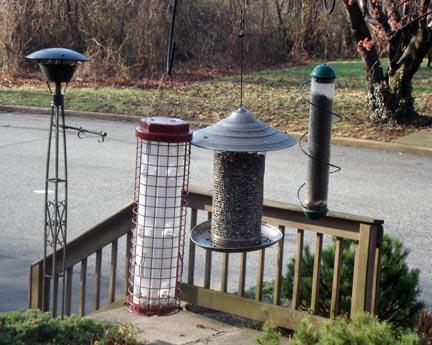 Squirrel feeder empty