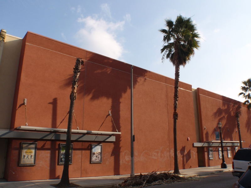 wind damaged palm tree in pasedena