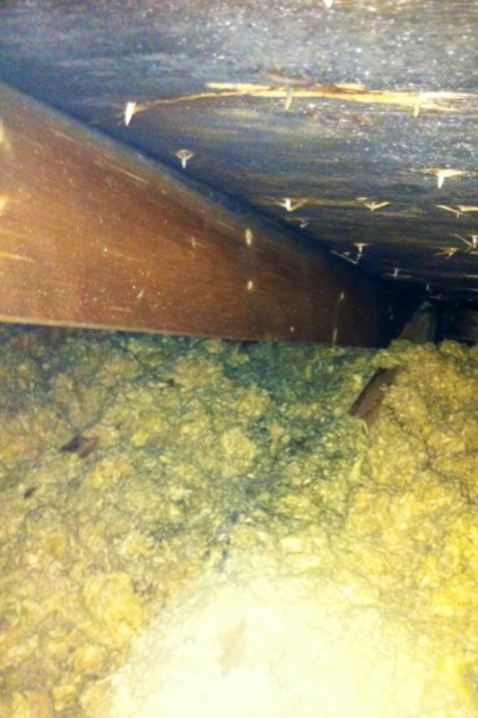 mold in Attic in house in Greenfield, Franklin County, Massachusetts