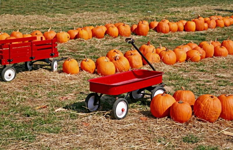 Moses Lake Pumpkin Patches