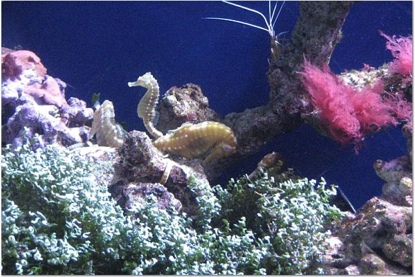 Los Angeles 411 Enjoy The Day At The Aquarium Of The