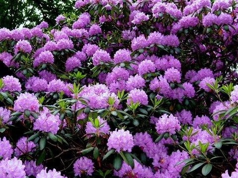 Velvet Ridge in the Spring