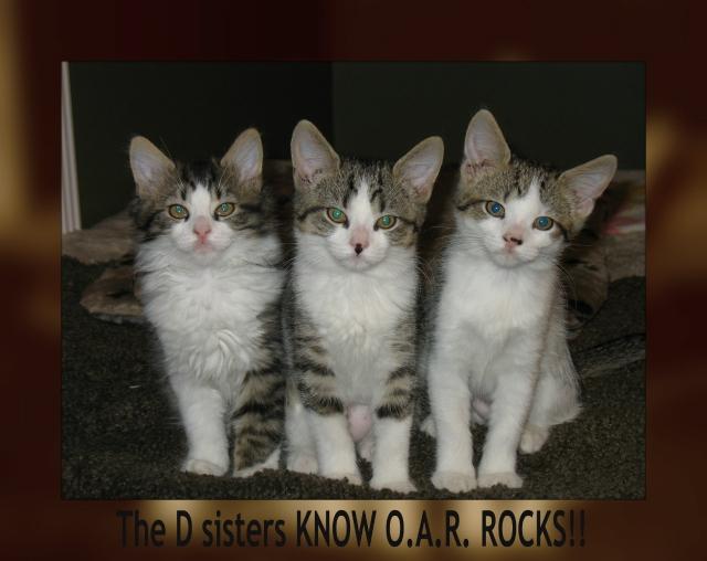 Cat Rescue Warren Ohio
