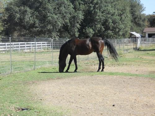 Horse near Gold Pond nursery