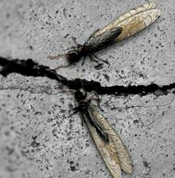 Termite 101- Everything you need to know about Termites to How to Rid Your Home