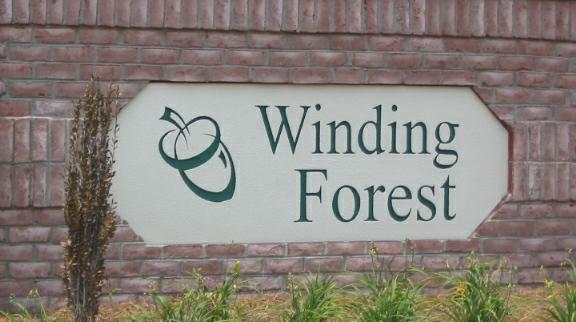 Winding Forest