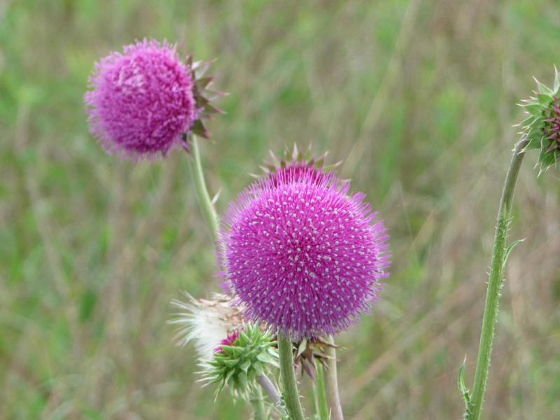 Speechless sundaypurple fuzzy ball purple fuzzy ball mightylinksfo