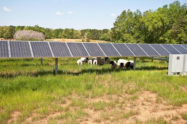 There S A Solar Farm In Cary Nc