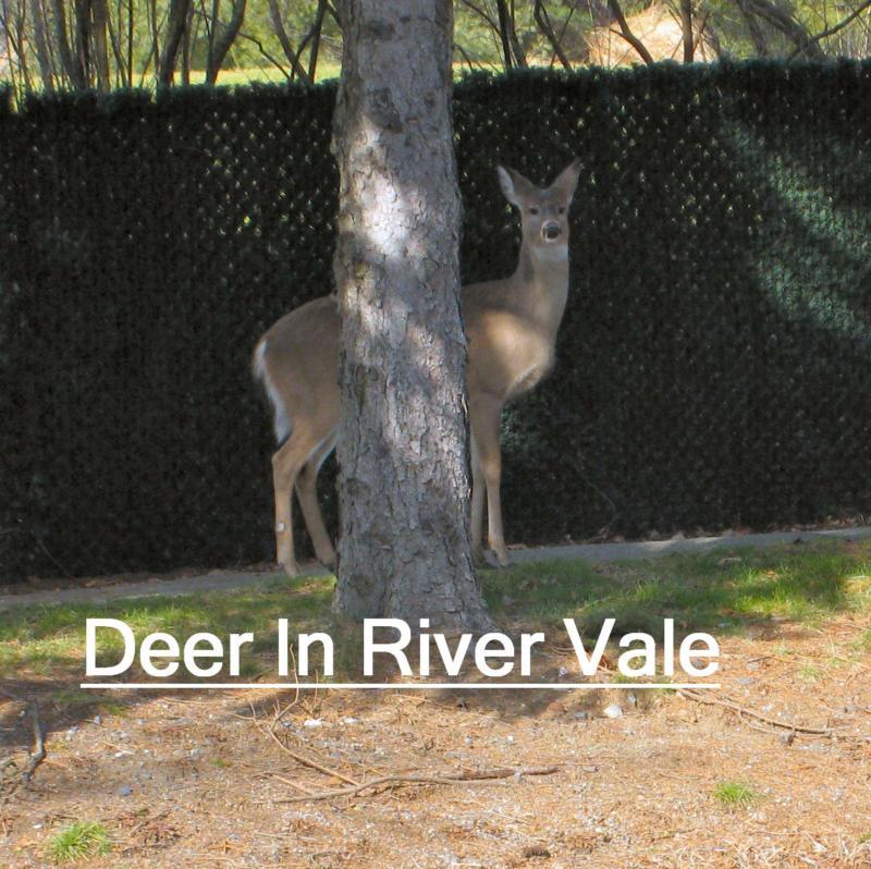 Deer river hispanic singles