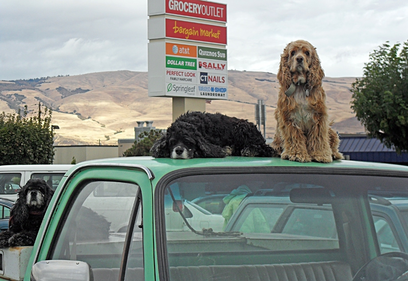Pups On A Truck, The Dalles, Oregon