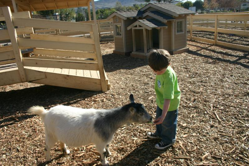 Lil' Lighthouse Preschool at the Petting Zoo