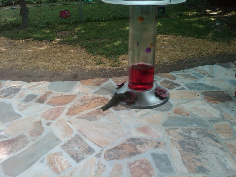 Hummingbird at feeder 2