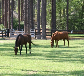 Horse Country Real Estate in Southern Pines