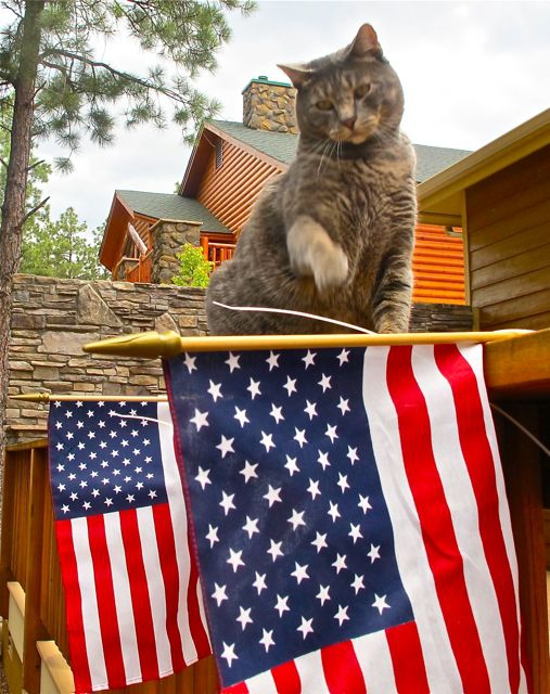 Flag and cat