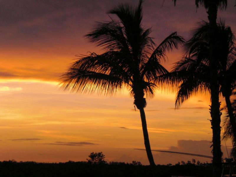 Cape Coral Palm Tree