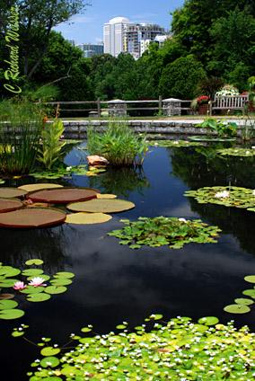 Atlanta Botanical Garden by Richard Weisser